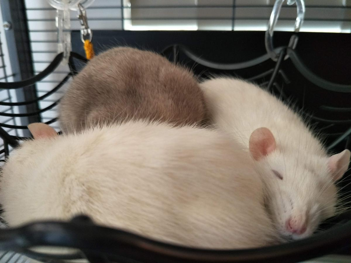 Squeak sound asleep in a cuddle puddle with her sisters.